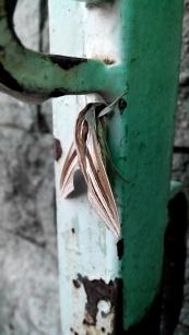 Indahnya Ngengat